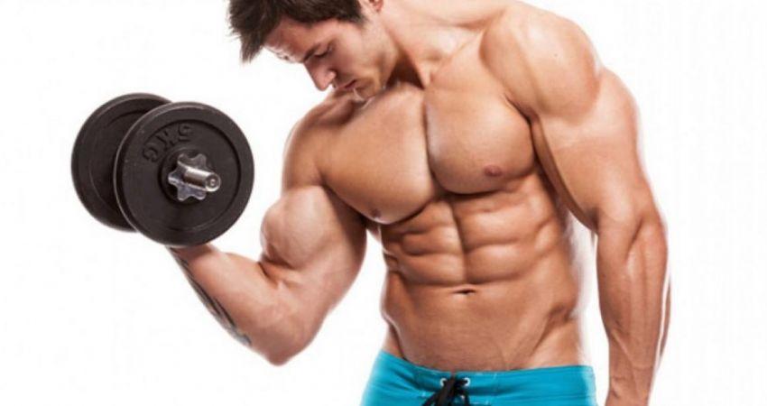 Biceps - Xplode Nutrition